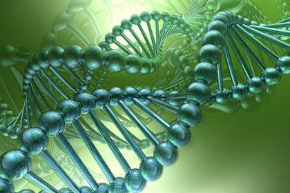 ARMONIA DEL DNA