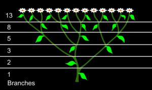 Phi come Quantità - Diramazione di Fibonacci Crediti Immagine: creationresearches.com