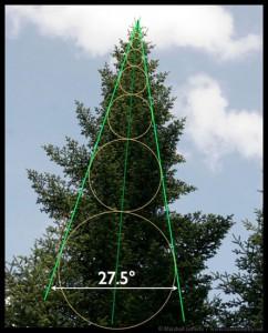 Illustrazione 13: un abete mostra che la sua forma sottostante è un cambio di scala frattale basato sull'angolo phi