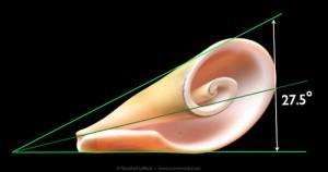 Illustrazione 14: una conchiglia esibisce una vicina approssimazione all'angolo di cambio di scala phi
