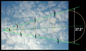 Illustrazione 15: pellicani in volo con angolo di cambio di scala phi
