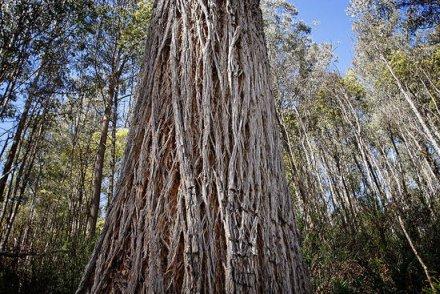 treespiral