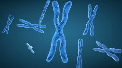 Genetica Ondulatoria