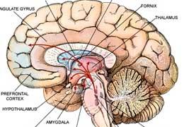 Exisulind per il cervello?