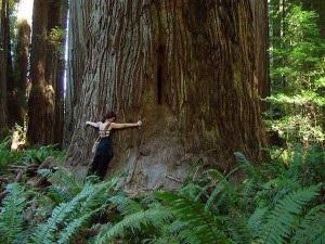 treeabbraccio